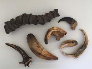 動物の角や牙、爪などの自然物がアクセサリーの起源